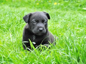 Puppy in green grass